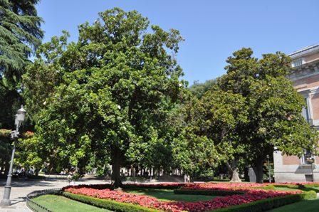 Mi jard n saltillense fotos de su evoluci n for Arboles perennes de crecimiento rapido en argentina